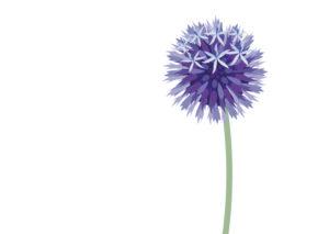 Logo ontwerp voor Anneke Beemer Tuinontwerp & fotografie